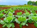 agriculture-concour-ub-2021-small-1